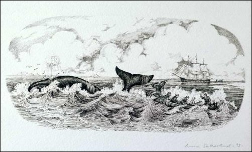 Used Modern sperm whale hunting